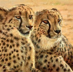 Cheetah, Africat Foundation by Tony Forrest -  sized 16x16 inches. Available from Whitewall Galleries